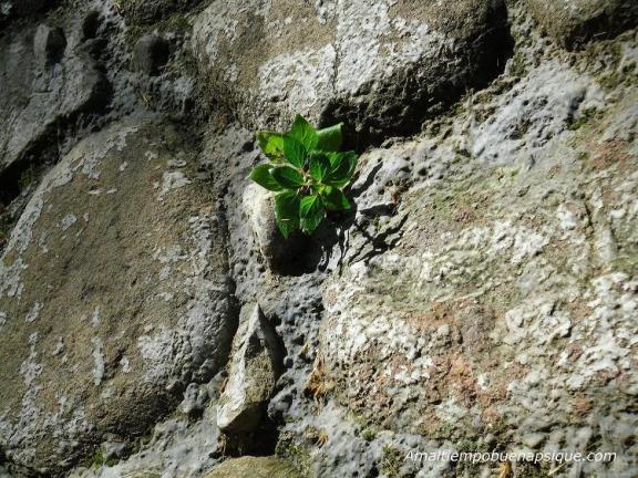 planta resistiendo condiciones adversas