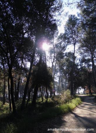 La luz del Sol entre las sombras de los árboles